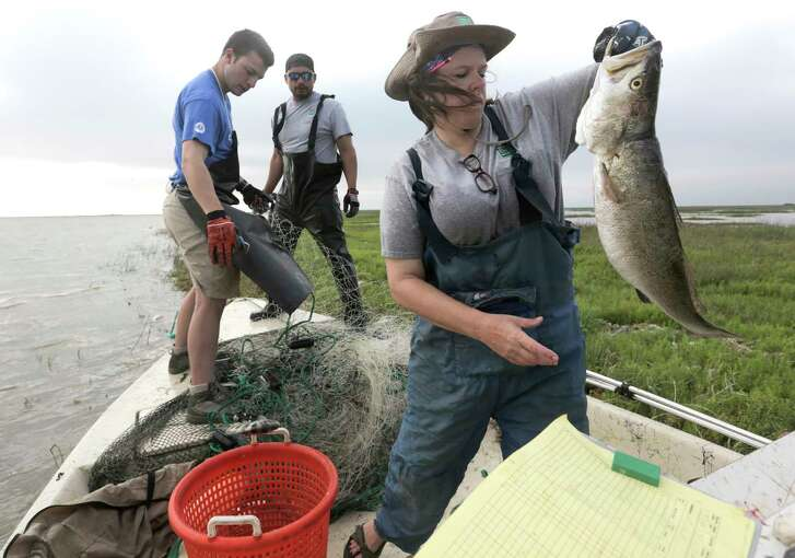 Texas Parks and Wildlife researcher Leslie Hartman takes notes on fish collected in a  gill net.