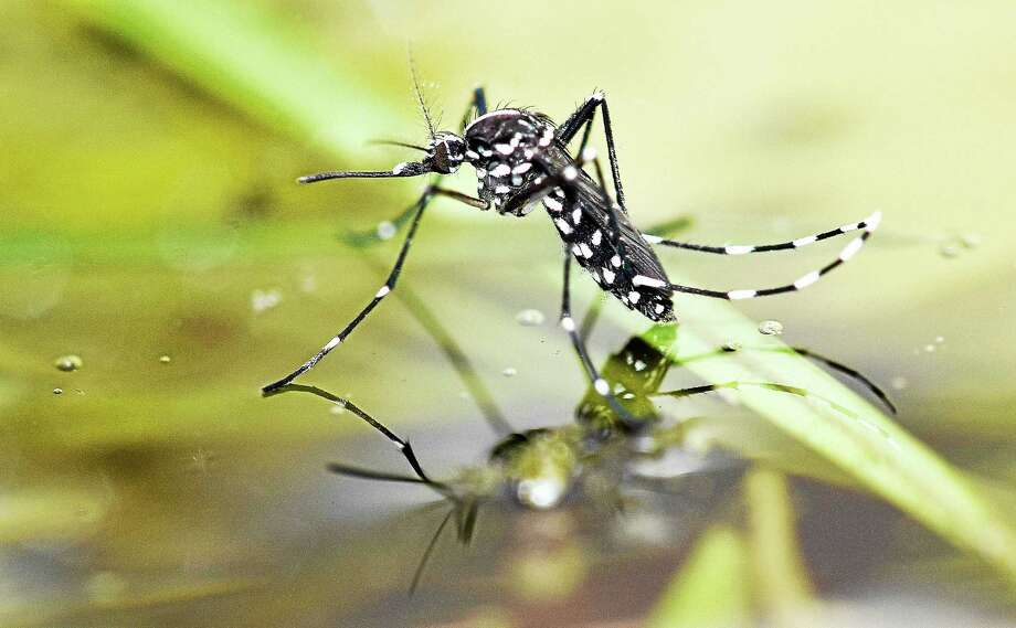 Pond in Mesa County tests positive for West Nile