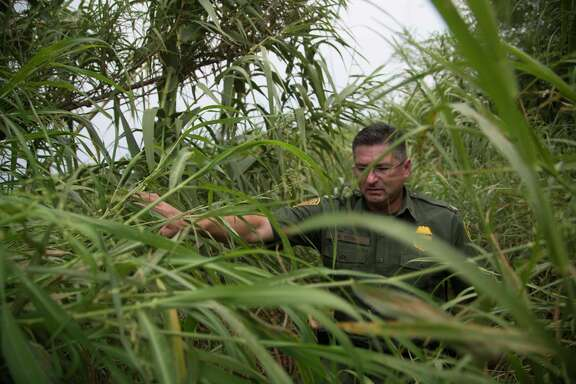 U.S Customs and Border Protection Operations Officer David Vera walks among the tall grass taking a look at the terrain near the end of the fenced area of the border of Del Rio with the Rio Grande river, Wednesday, Aug. 16, 2017.