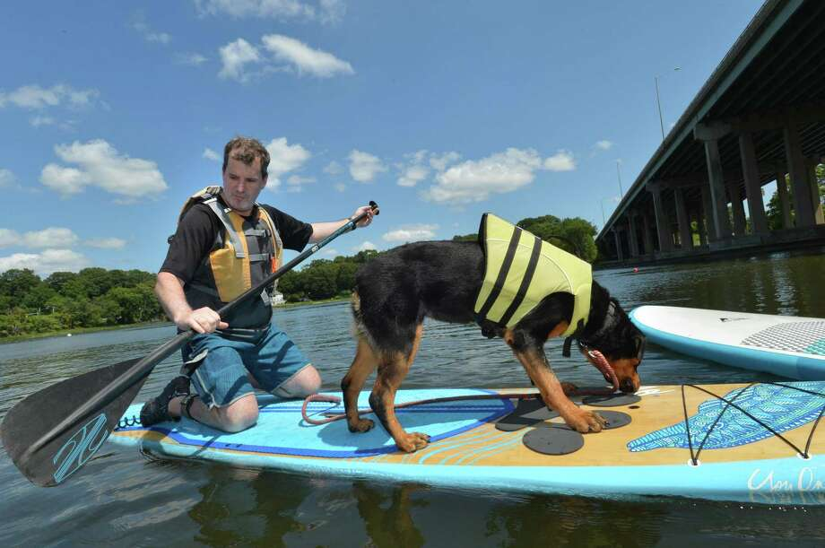Flash, an 11-month-old rotweiller, gets on board with owner Larry Cobrin for the first time after a lesson from Down Under instructor Daniel Giannattasio in the Sup with a Pup program, which helps dogs and their owners get together while stand-up paddleboarding. The shop offers all types of paddle and kayak lessons on the Saugatuck River in Westport Conn. August 13, 2017 Photo: Alex Von Kleydorff / Hearst Connecticut Media / Norwalk Hour