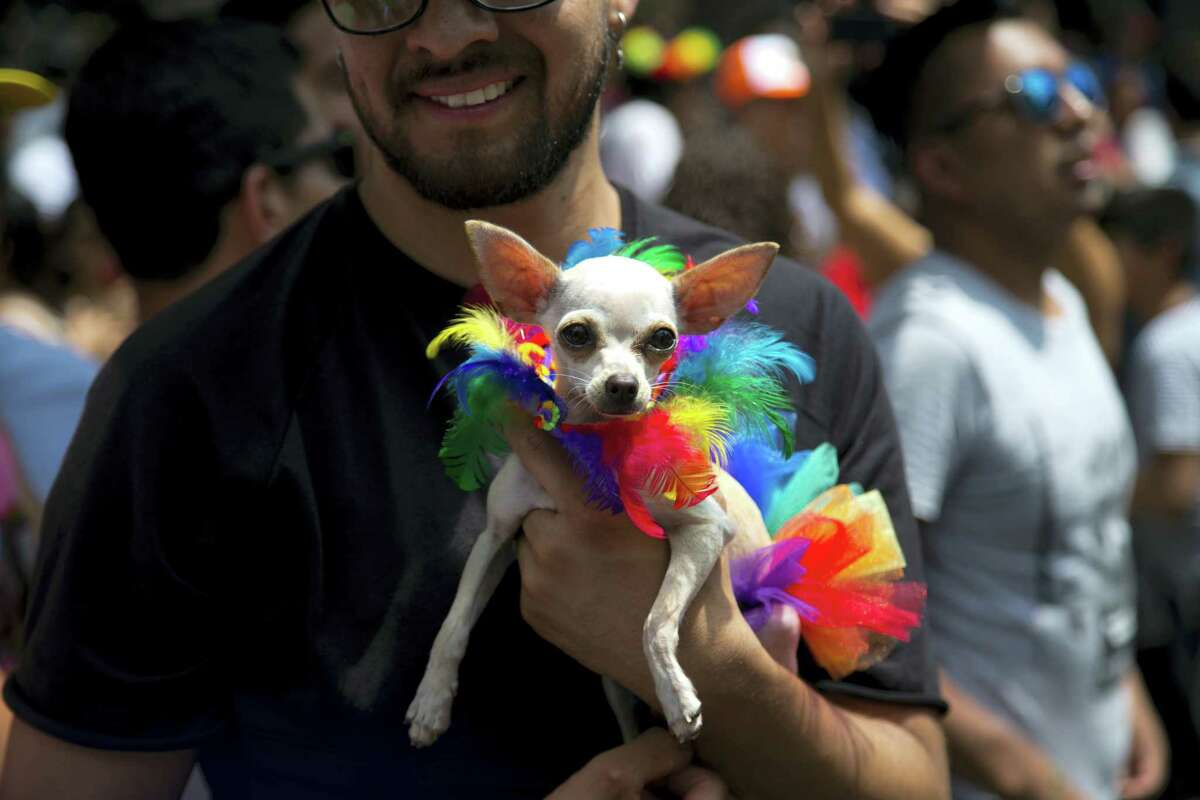 A reveler holds his dog as he takes part in Mexico City's gay pride parade on June 24, 2017. Thousands marched down Paseo de la Reforma for one of the largest gay pride events in Latin America.