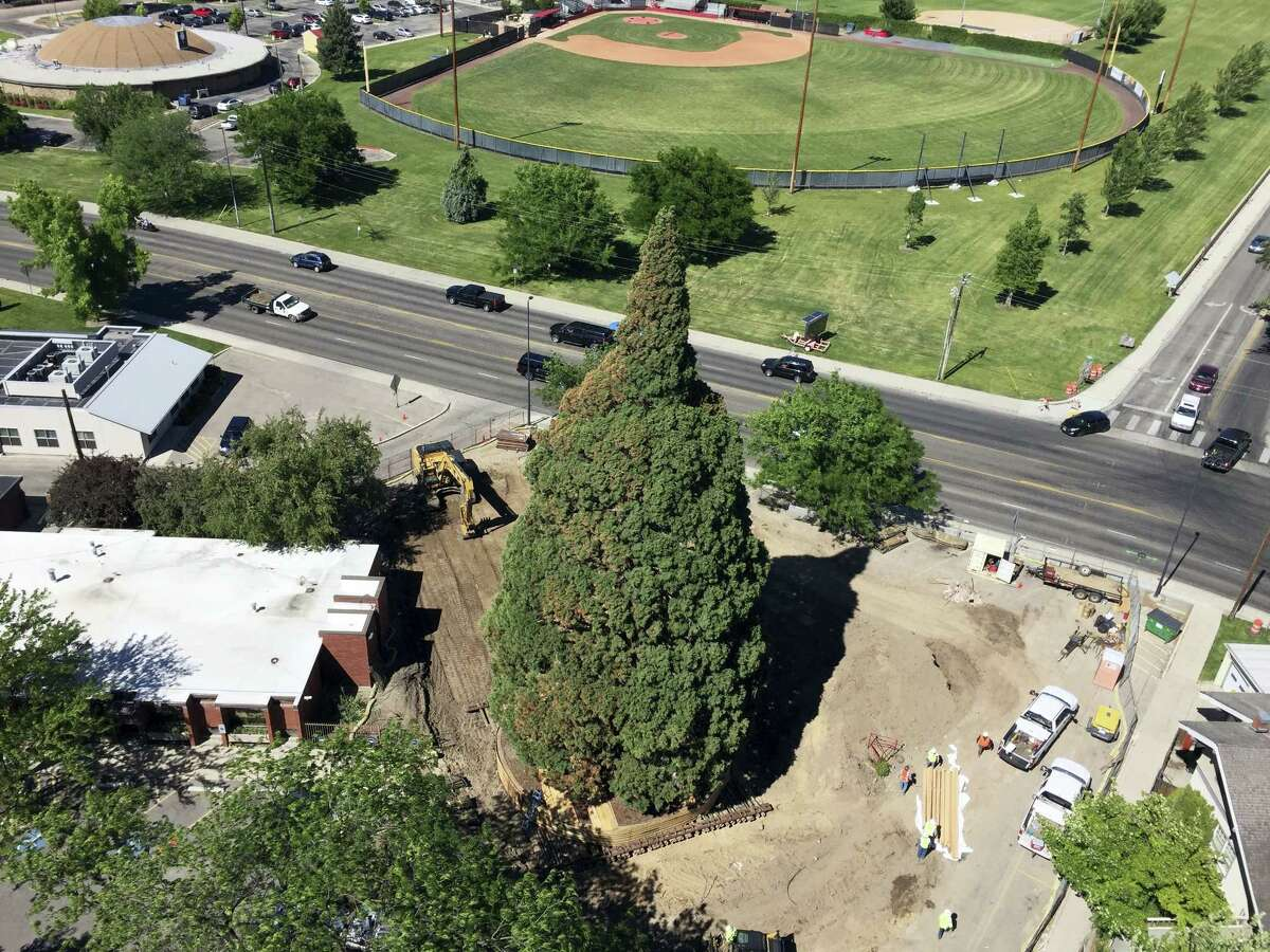 An aerial view shows heavy machinery used by workers as they pruned the roots, built a burlap, plywood and steel-pipe structure to contain the rootball so they can move the roughly 100-foot sequoia tree in Boise, Idaho, Thursday, June 22, 2017. The sequoia tree sent more than a century ago by naturalist John Muir to Idaho and planted in a Boise medical doctor's yard has become an obstacle to progress. So the 98-foot (30-meter) sequoia planted in 1912 and that's in the way of a Boise hospital's expansion is being uprooted and moved about a block to city property this weekend.