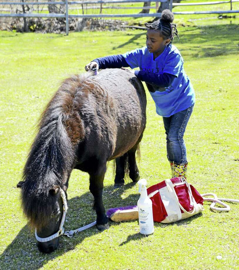 Young visitors to H.O.R.S.E of Connecticut can help groom the horses at the farm during Kids Fun Day on Saturday. Photo: Contributed Photo