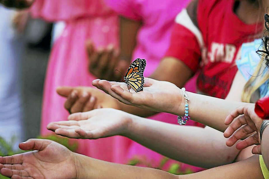 Children and adults are invited to the Bellamy-Ferriday House & Garden on Saturday to celebrate pollinators and learn the importance of butterflies, bees and other winged creatures. Photo: Photographs Courtesy Of Connecticut Landmarks