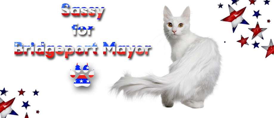 """Sassy the cat has announced her bid to run for Bridgeport mayor on her Facebook page, """"Sassy For Bridgeport Mayor."""" Photo: Contributed/ Facebook"""