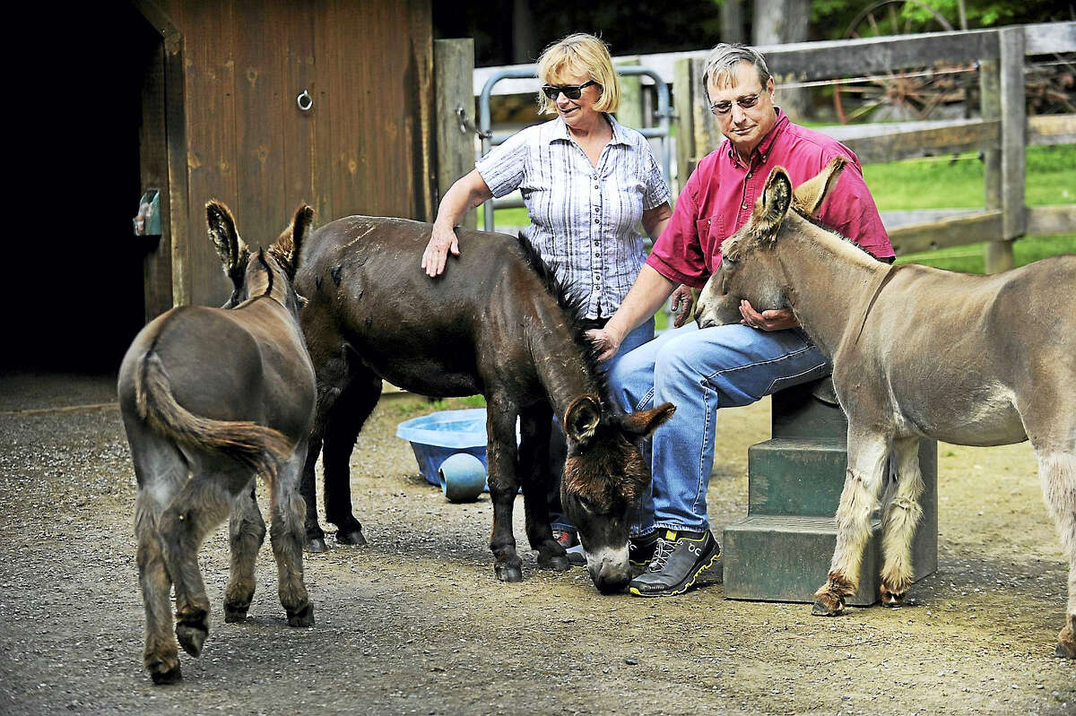 Megg and Ted Hoffman with their three remaining donkeys, Merlin, Max and Murdock, on their Kent farm June 1. A fourth donkey was killed by a bear recently.