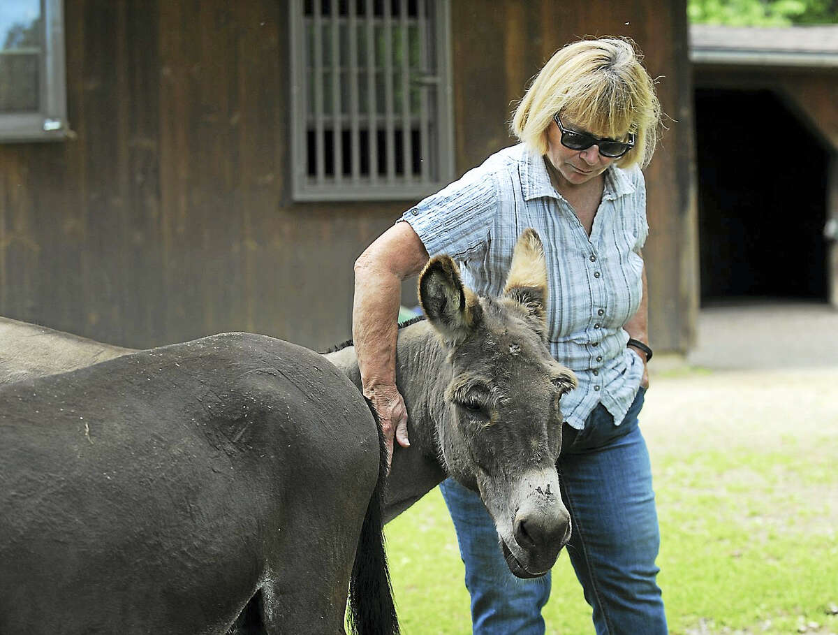 Megg Hoffman of Kent, talks about the bear attack that killed one of the donkeys on her farm.