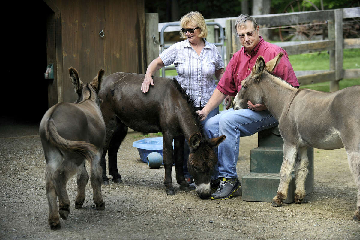 In this June 1, 2017, Megg and Ted Hoffman sit with their three remaining donkeys, Merlin, Max and Murdock, on their Kent, Conn. farm. The Connecticut family said a black bear killed and ate one of their beloved donkeys on May 21.