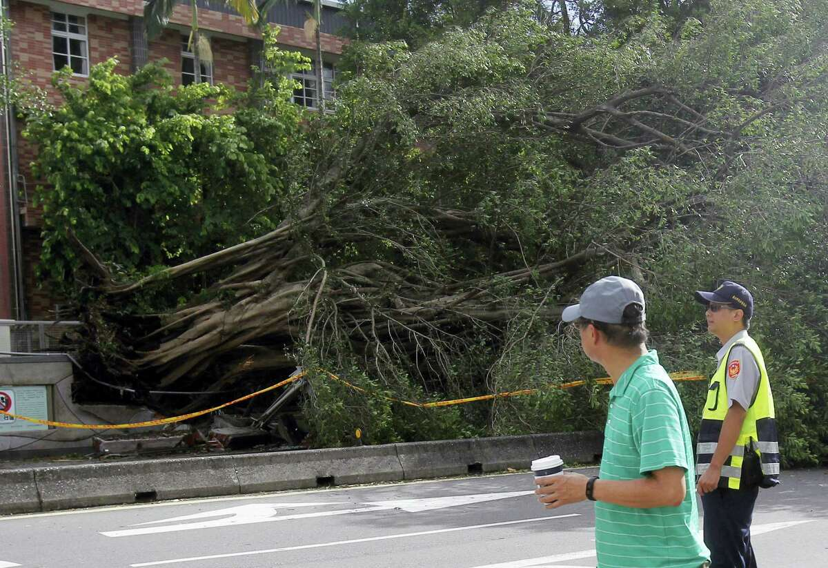 A passer-by looks back to a tree uprooted by strong winds caused by Typhoon Nesat in Taipei, Taiwan, Sunday, July 30, 2017.