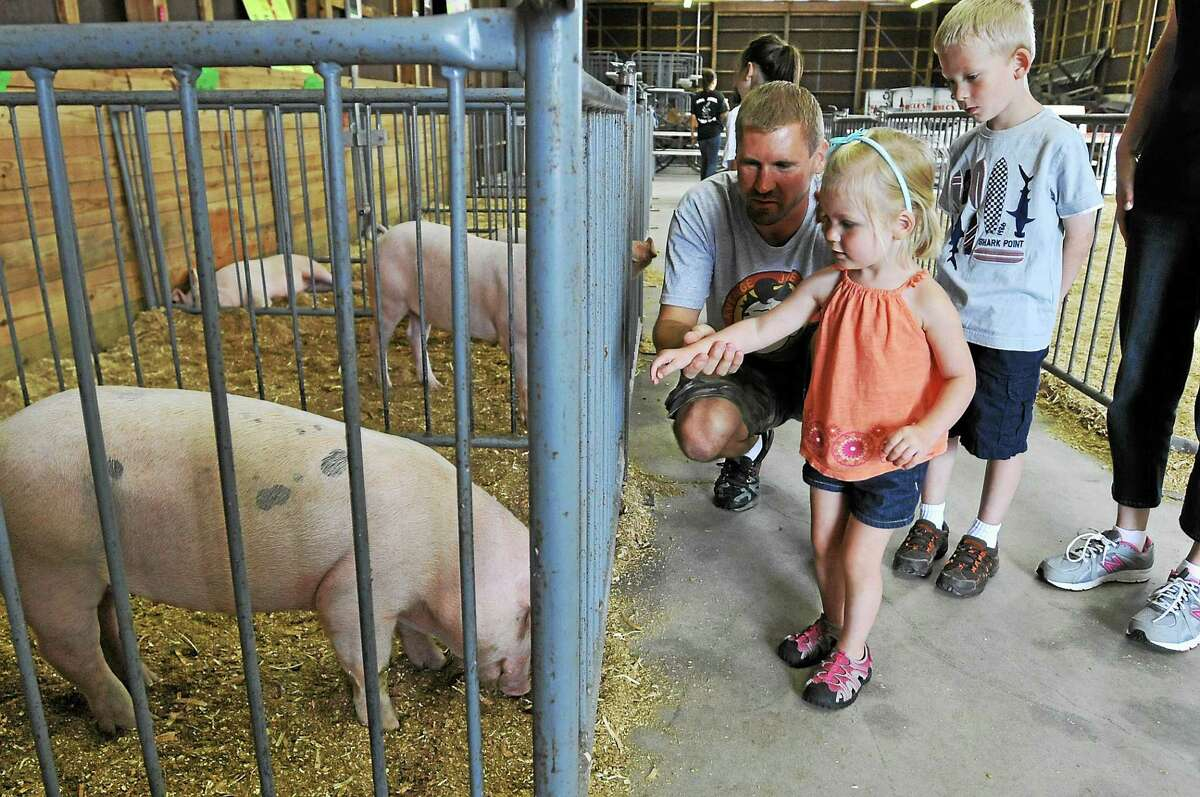 A young visitor meets a pig at the 4-H Fair.