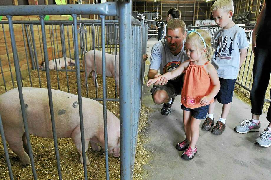 A young visitor meets a pig at the 4-H Fair. Photo: Register Citizen File Photo