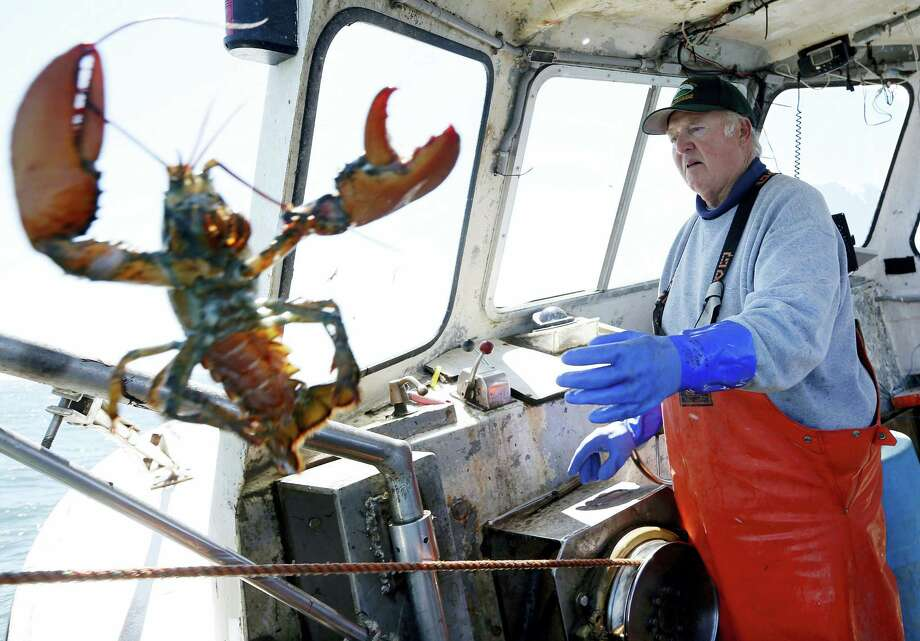 In this April 27, 2016, file photo, Richard Sawyer, Jr., tosses back an undersized lobster while fishing on Long Island Sound off Groton, Conn. A vote is expected Tuesday, Aug. 1, 2017, by the Atlantic States Marine Fisheries Commission on a plan to try to slow the decline of southern New England's lobster population with new fishing restrictions. Photo: AP Photo/Robert F. Bukaty, File  / Copyright 2017 The Associated Press. All rights reserved.