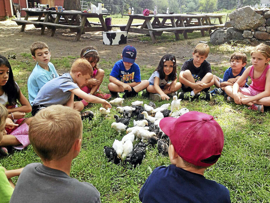 Children meet a flock of chicks and chickens at Flanders Nature Center, where a spring break program will be held the week of April 10. Photo: Contributed Photo
