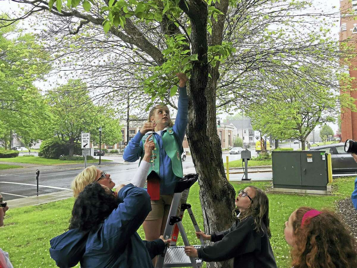 With help from Mayor Elinor Carbone and City Hall staff, members of Girl Scout Junior Troop 40004 installed birdhouses in front of City Hall in Torrington Monday afternoon.