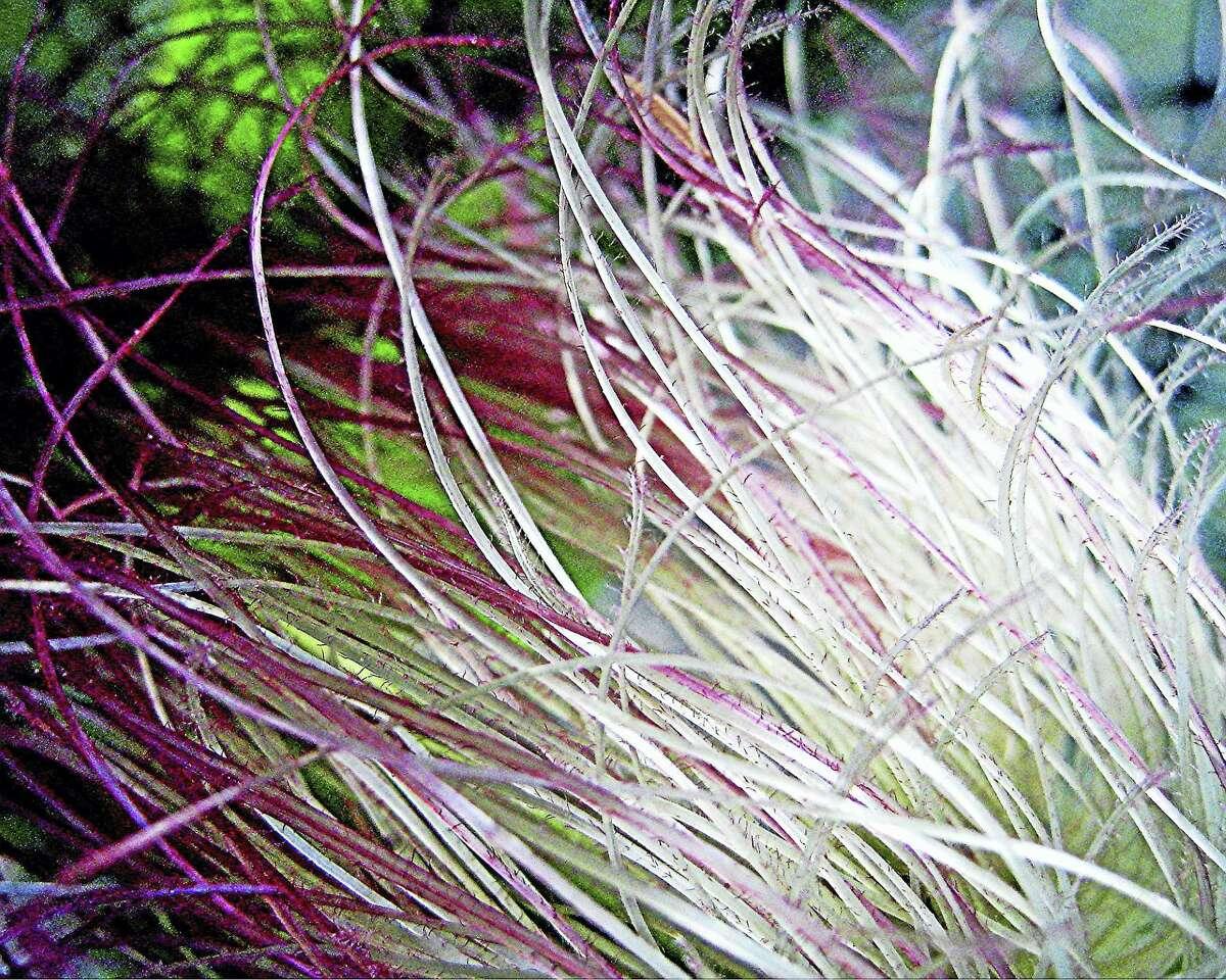Kimberly Day Proctor Corn Silk