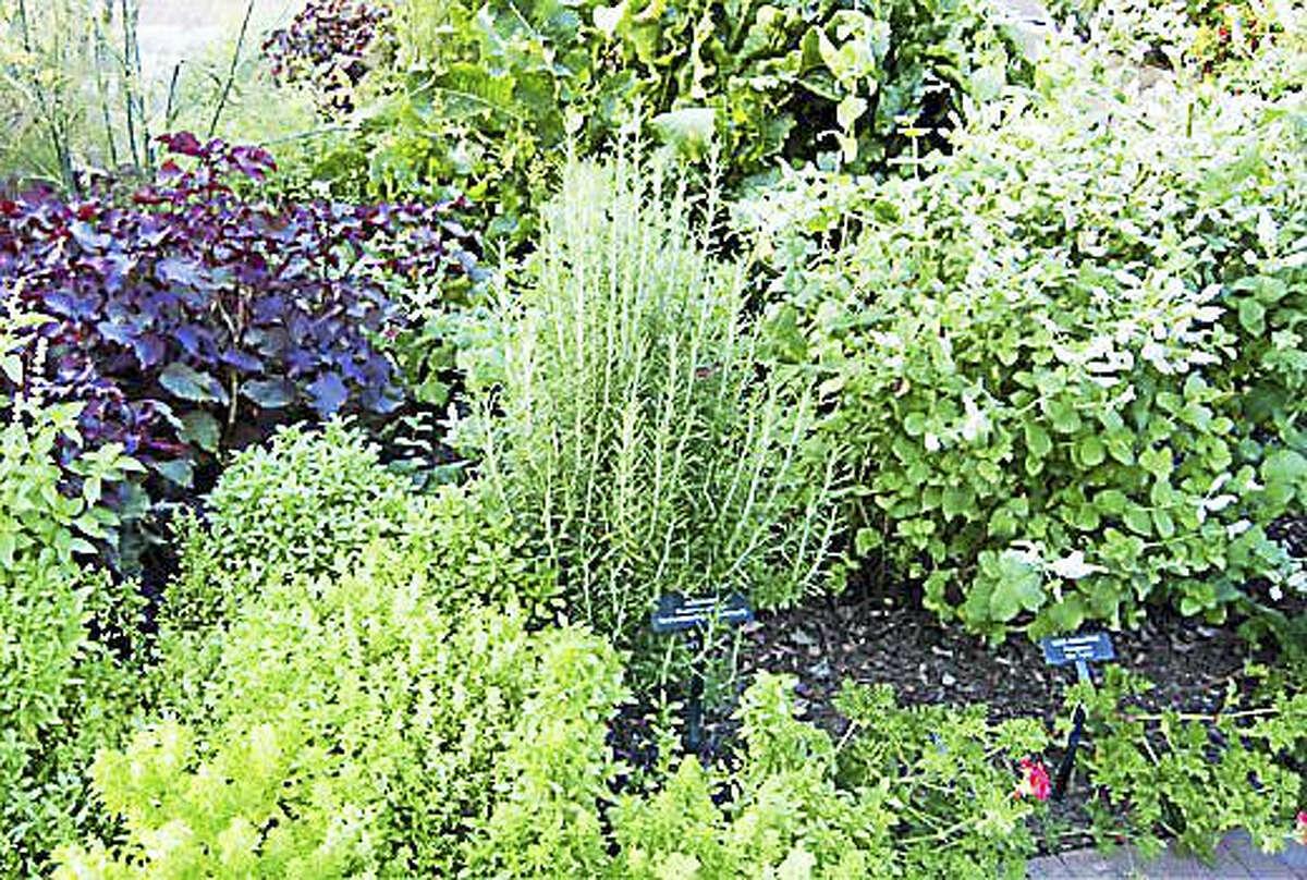 An herb garden in full bloom.