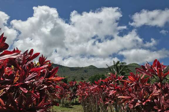 Scenes from the town of Hana on Maui. (Detailed caption info TK.)