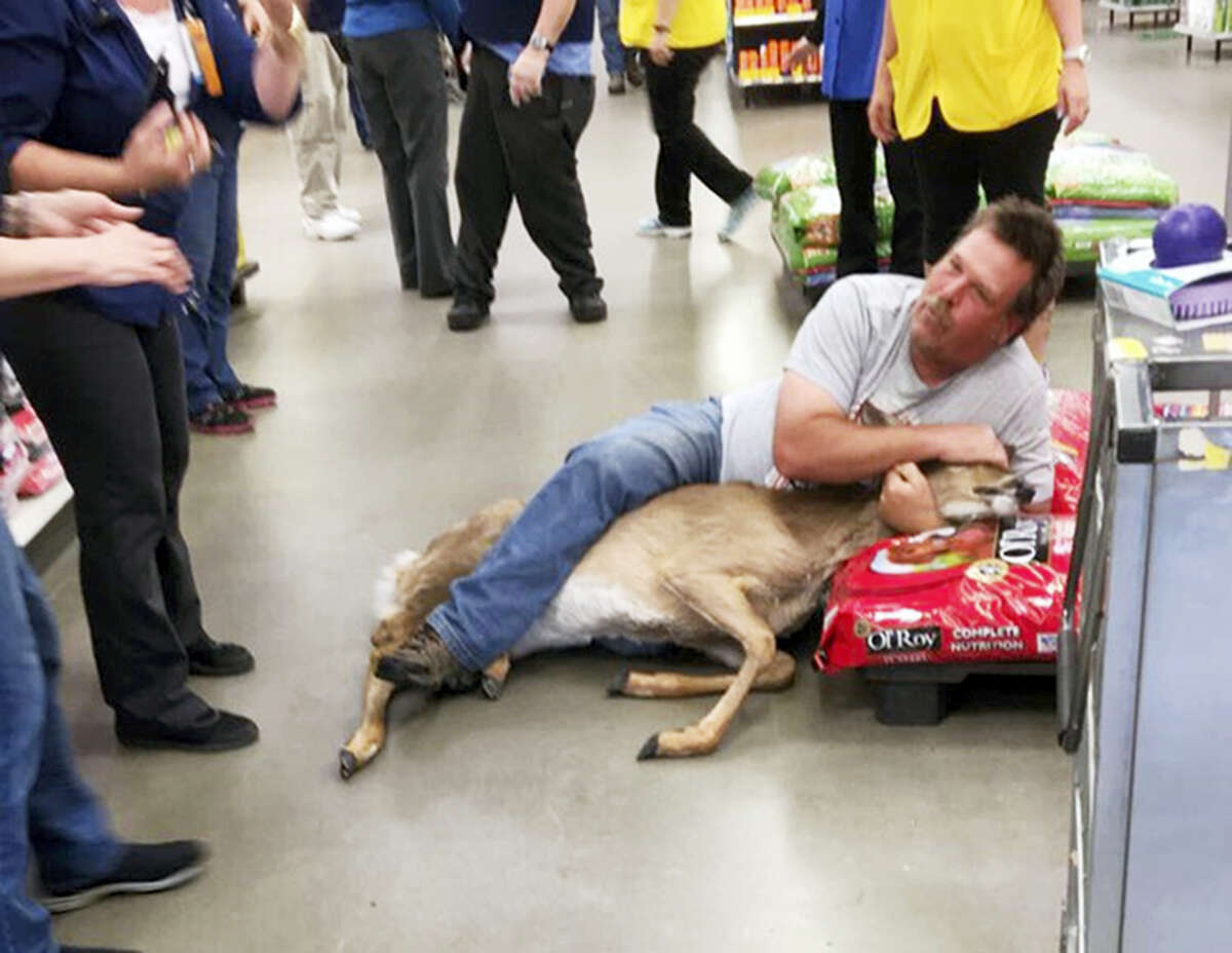 The May 16, 2017, photo, provided by Stephanie L Koljonen shows Tom Grasswick, a customer at a Walmart store in Wadena, Minn., holding onto a confused white-tailed deer that wandered into the store. Grasswick covered the eyes of the startled deer and he and others managed to remove the animal and set it free outdoors.