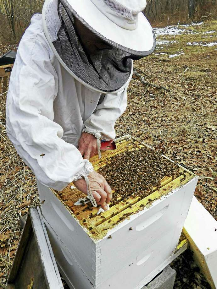 """Flanders is pleased to again be offering its popular introductory beekeeping course.  The workshops will promote the importance of pollinators and show students how to start and keep a hive, as well as brainstorm new ideas to help keep our pollinators alive and thriving. This series will consist of three classes and two field trips to a local apiary.   The beekeeping classes will be a hands-on experience with bees and be led by Al Avitabile, Emeritus Professor in the Biology Department at UCONN, co-author of """"The Beekeeper's Handbook"""" and noted beekeeper and researcher.    Classes will be held on three consecutive Tuesday evenings in March. The first session of the program will be held on Tuesday, March 14   at  7PM in the Flanders Studio located at 5 Church Hill Road in Woodbury. The other two classes will be held on March 21 and 28th. It will also include two Saturday field trips in April to an apiary to install a package of bees and to then check on them a week after that installation.  The cost for all the sessions is $85 for Flanders' members and $120 for nonmembers. Those interested may register online at www.flandersnaturecenter.org or call  203-263-3711, ext. 10, for more information. Photo: CREDIT HERE"""