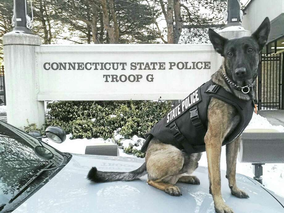 "CONTRIBUTED PHOTOPROTECTIVE VESTThe Connecticut State Police K-9 Silver has received a bullet- and stab-protective vest thanks to a charitable donation from nonprofit organization Vested Interest in K9s of East Taunton, Mass. It will be embroidered with ""In Memory of K-9 Ike, Vancouver Police Department."" Silver has been assigned to Trooper First Class Thomas Mitri since September 2015 and is working at Troop G in Bridgeport. Photo: Digital First Media"