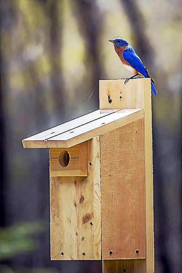 Learn to build a bluebird nesting box at a workshop at Flanders Nature Center in Woodbury on Saturday, Feb. 11. Photo: Contributed Photo