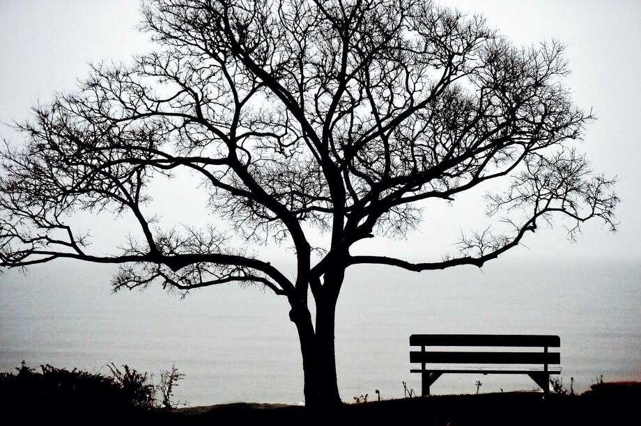 A tree, a bench and a view of Long Island Sound photographed from Linden Avenue in the Linden Shore District in Branford creates a peaceful setting, Thursday, December 29, 2016. (Catherine Avalone/New Haven Register) Photo: File Photo / New Haven RegisterThe Middletown Press