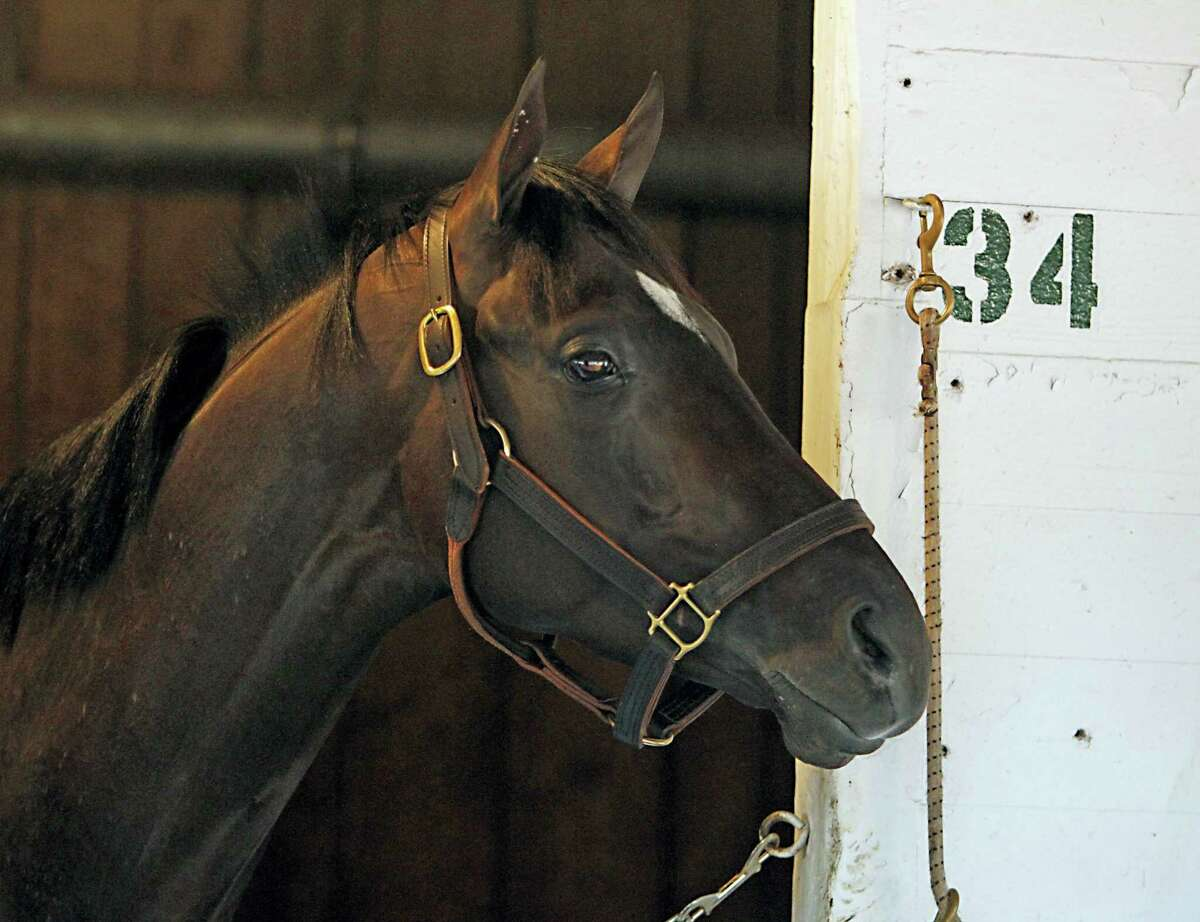 Kentucky Derby champion Always Dreaming watches all the activity outside his stall at Churchill Downs.