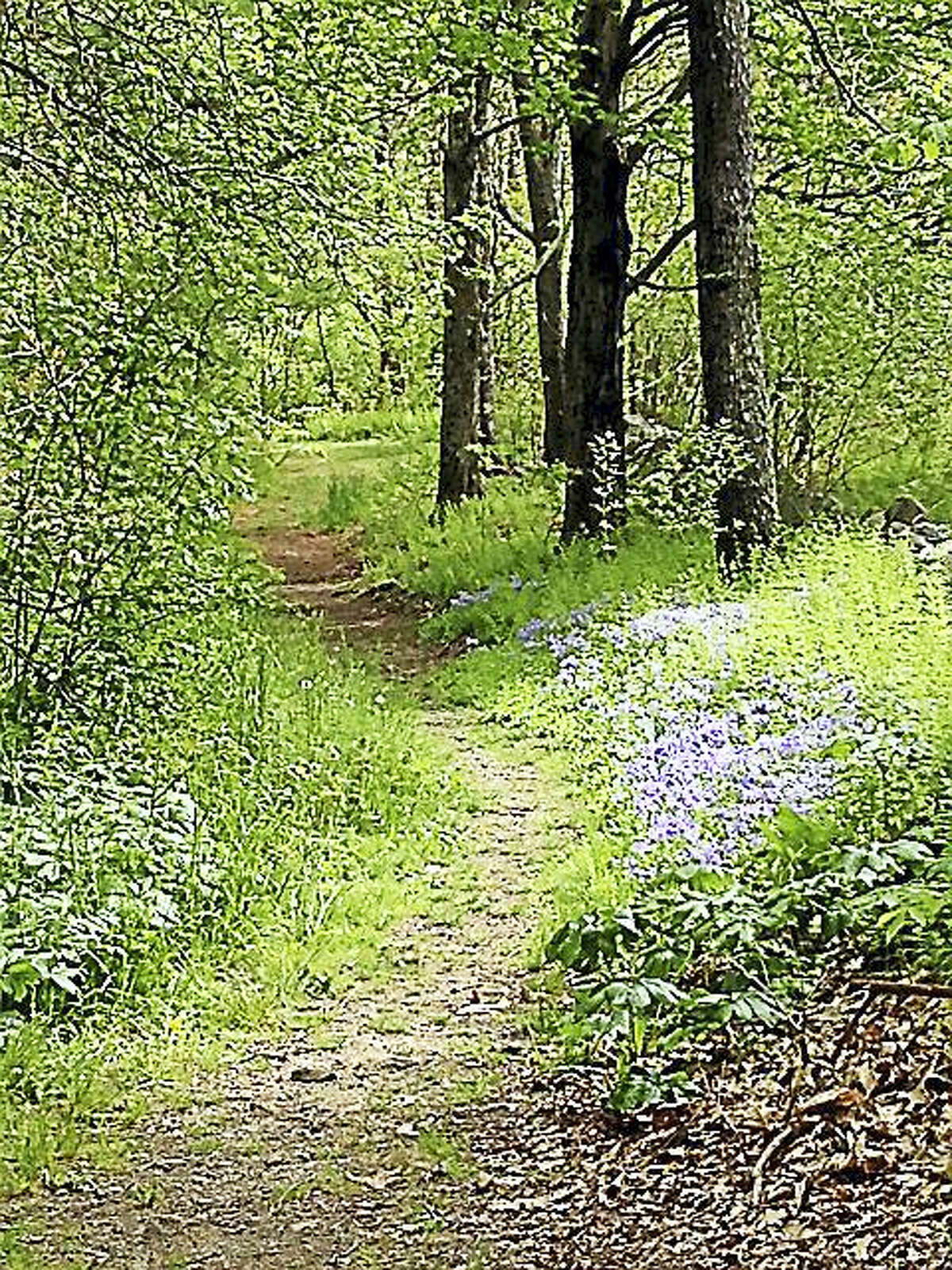 Walks on Flanders Nature Center's Botany Trail begin Sunday and continue on Sundays in May.