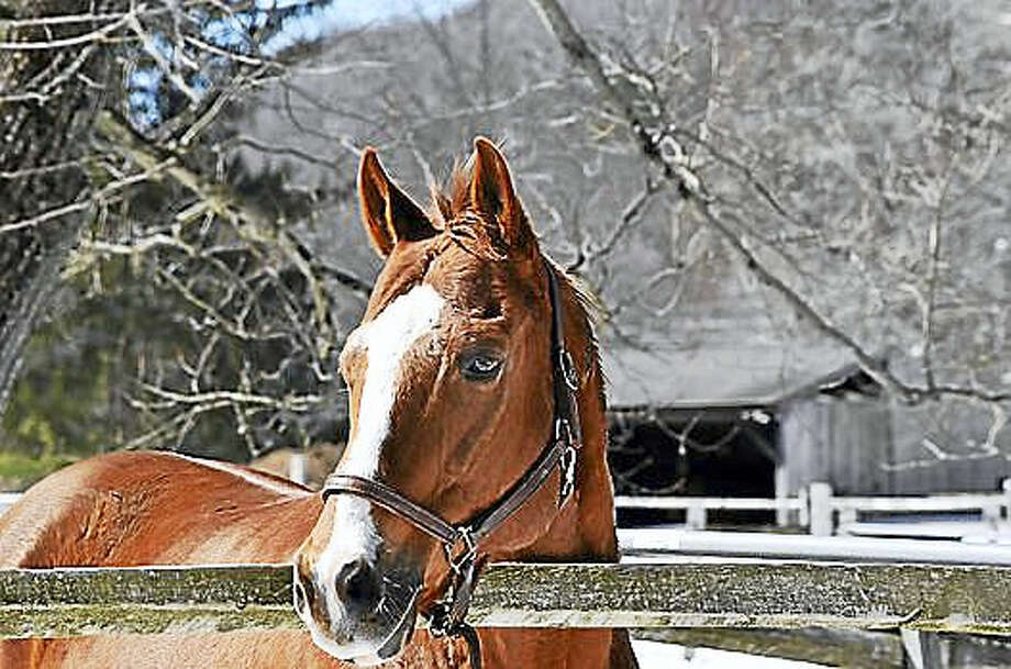 Legend is one of the many horses awaiting visitors at H.O.R.S.E. of Connecticut in Washington, where a spring horse parade is planned on Saturday. Photo: Contributed Photo