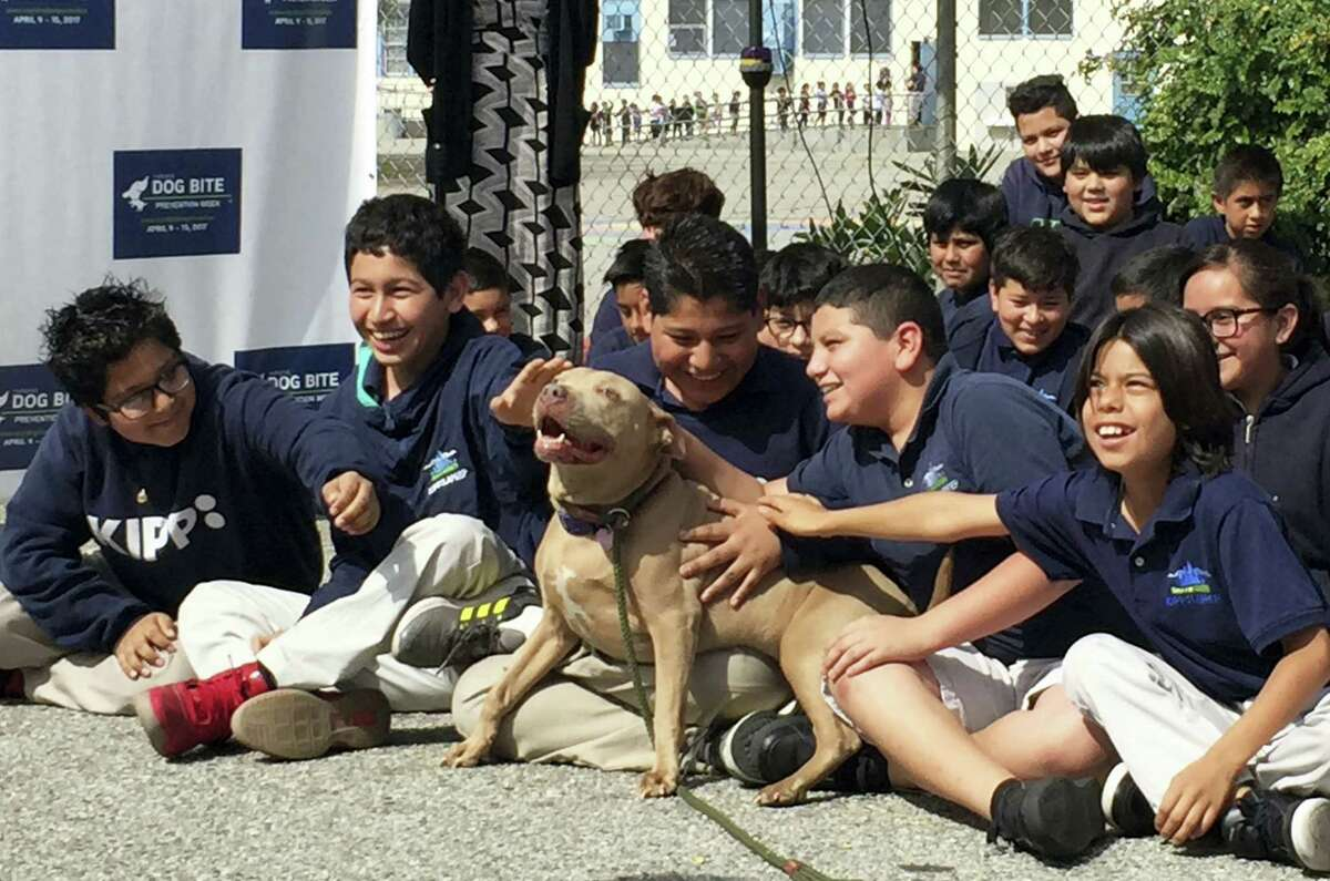 """A pit bull named """"Lucy"""" is petted by schoolchildren as part of the U.S. Postal Service """"National Dog Bite Prevention Week,"""" during an awareness event at the YMCA in Los Angeles."""