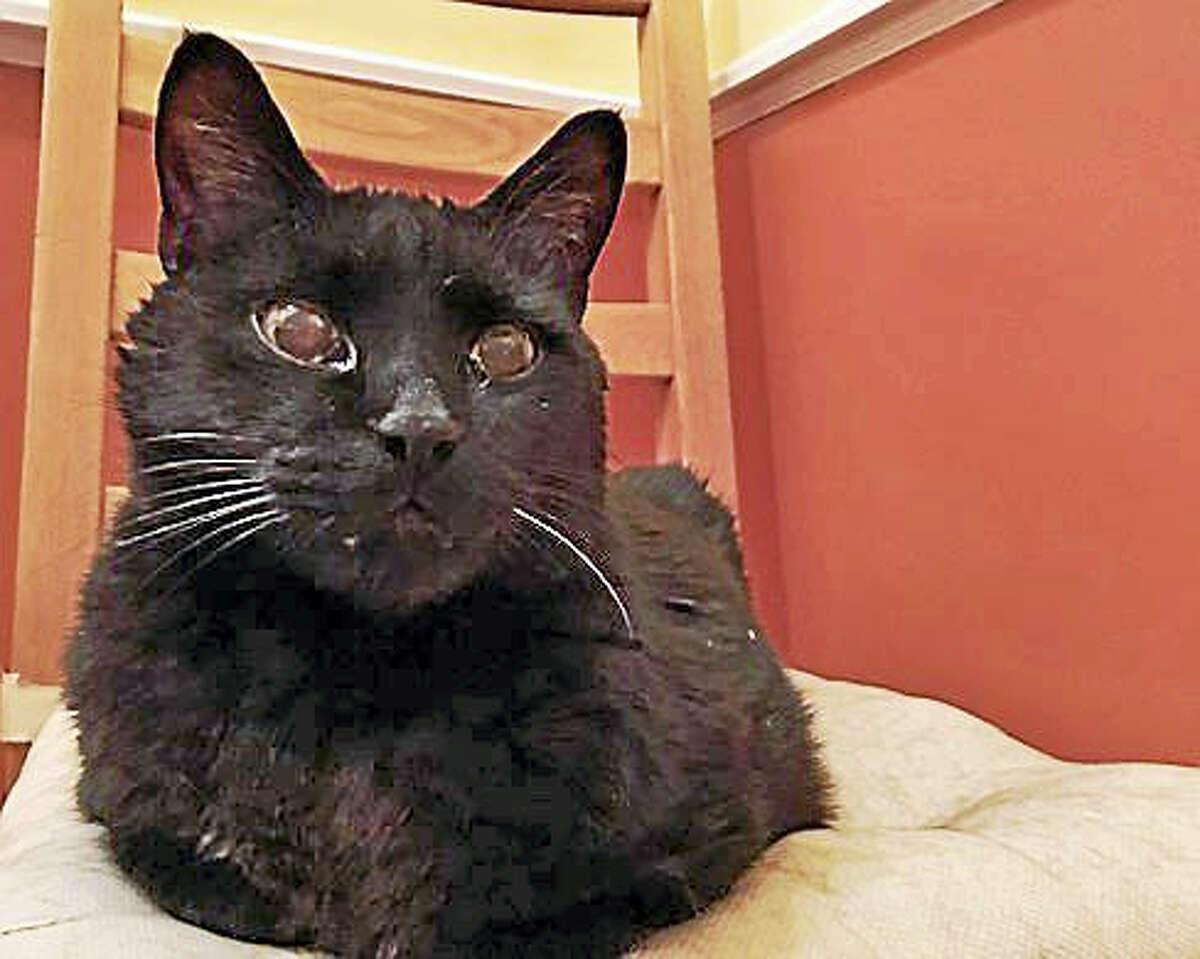 Jorge the CTNewsJunkie Cat, aka Hoover