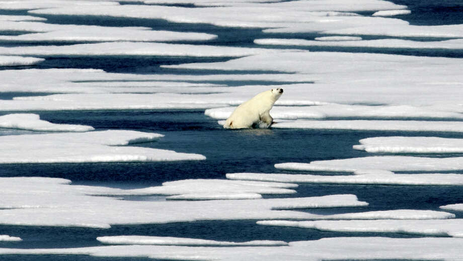 A polar bear steps out of a pool while walking on the ice in the Franklin Strait in the Canadian Arctic Archipelago, Saturday, July 22, 2017. Industry experts, researchers and veterans of the Far North say there remain many obstacles to reaping the riches once blocked by the ice. Conservationists also oppose the large-scale extraction of Arctic resources, fearing that the fragile environment will be irreparably harmed. (AP Photo/David Goldman) Photo: David Goldman, STF / Copyright 2017 The Associated Press. All rights reserved.