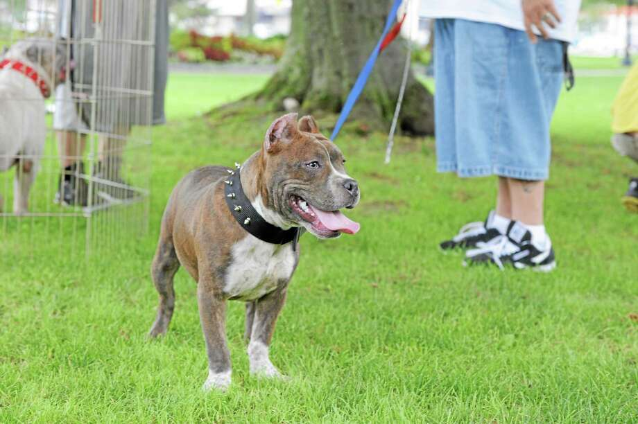 Katanga waits her turn for vaccinations at the Pittie Party in Coe Memorial Park in this 2012 file photo. Photo: Register Citizen File Photo