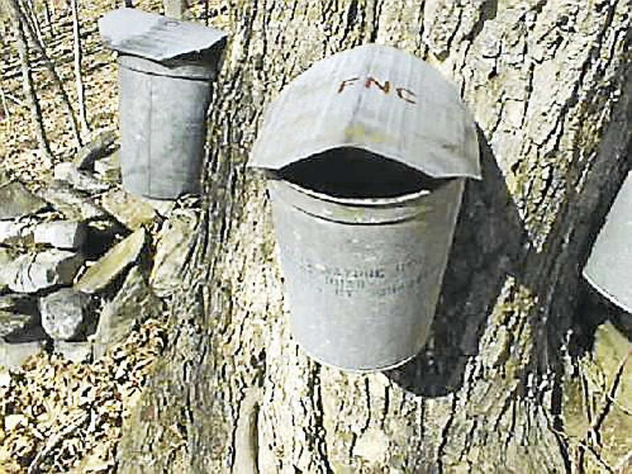 Maple sugaring time, a New England tradition, will be starting soon! Each year Flanders taps and collects sap from dozens of trees both here at the nature center and around Woodbury and  invite anyone with an interest in maple sugaring with us this year to attend a volunteer information meeting on Tuesday evening January 26th  at 7 PM at The Studio located at the corner of Flanders and Church Hill Road in Woodbury.  There will be an overview of the 2016 season and details on the many interesting volunteer opportunities. Refreshments will be served. Tree tapping day, weather permitting, is scheduled for Saturday, February 6. No experience is needed and all ages and families are welcome to come to help out. For the purposes of coordination we are asking that this year those planning on coming that day also preregister so that we know that you plan on being a part of tapping the trees. Tree tappper volunteers will meet at the Flanders Sugar House at 9:30 AM. It is located at 5 Church Hill Road in Woodbury. These events are free and open to the public. To register for the information session and/or tapping day please call 203-263-3711 Ext. 10. If you are unable to attend either session but are interested in volunteering during the season then call and we will be happy to match your interests to the volunteer opportunities. Photo: Journal Register Co.