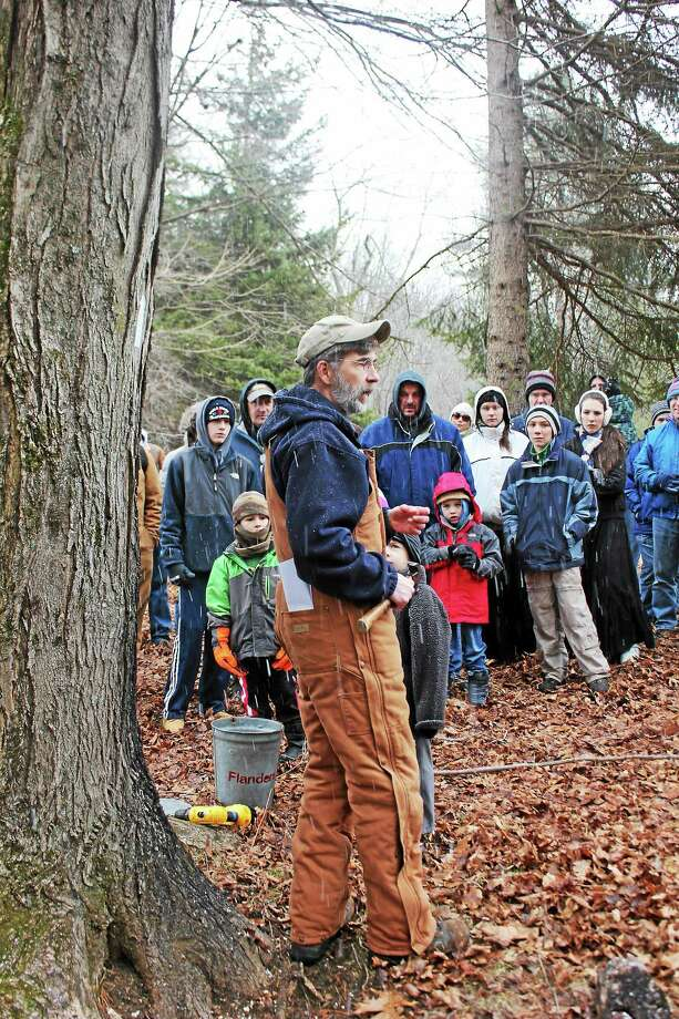 Harry Gerowe demonstrates how to tap a tree for maple sap at Flanders in 2014. Photo: Contributed Photo