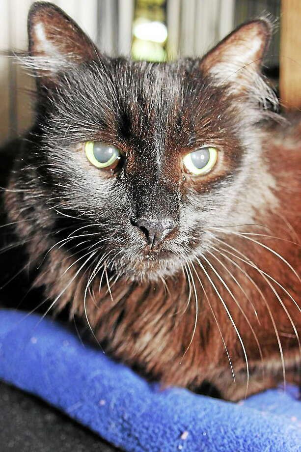 Augie and Tobie Augie and Tobie are sweet brothers who came from the same household and need to be adopted together. Augie has short hair and loads of personality. He loves being petted and will even stand on his hind legs to rub his face on your hands. Tobie has long hair and is a bit more shy. Both of them love being petted and will let you walk around while holding them. Please drop by our adoption center in Granby and visit them. Reach Maryís Kitty Korner at 860-379-4141 or 413-297-0537 or visit maryskittykorner.org. Or email marys.kitty.korner@sbcglobal.net. We remind interested persons that the pets pictured may already have been adopted. Photo: Journal Register Co.