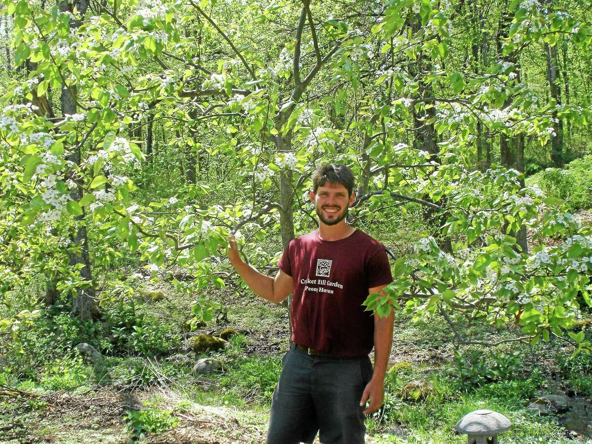 Stephen Underwood photo Dan Furman, standing next to an Asian pear tree, has begun to take over the leadership role of Cricket Hill Garden in Thomaston.