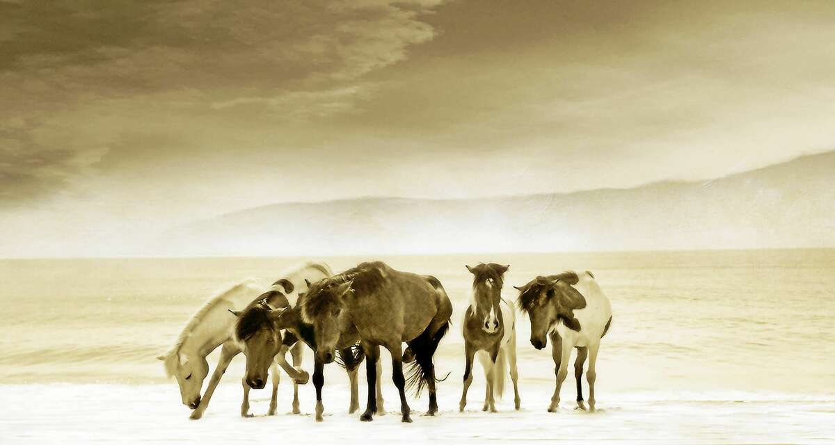 """Contributed photo Photograph by Bantam fine art photographer Judith Secco, """"Wild Ponies."""""""