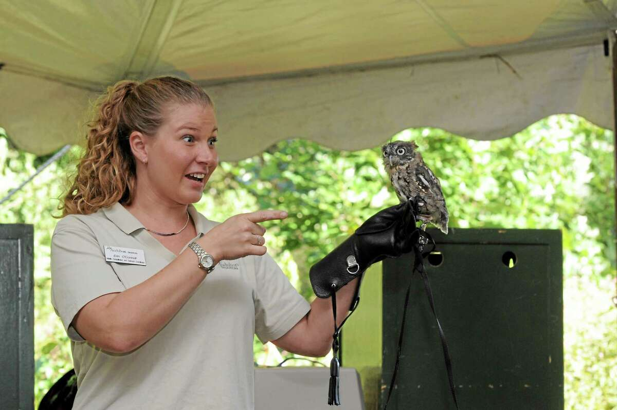 Erin O'Connell, Sharon Audubon Wildlife Rehab & Outreach Coordinator, is seen with a small owl in this file photo.