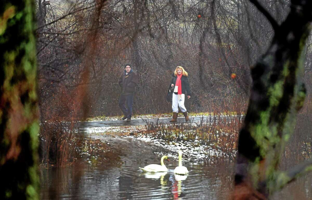 In chilly temperatures and some fog, a couple take time to look at swans during a walk by the Edgewood Park Duck Pond near Chapel Street in New Haven Sunday. The couple preferred to remain unidentified.