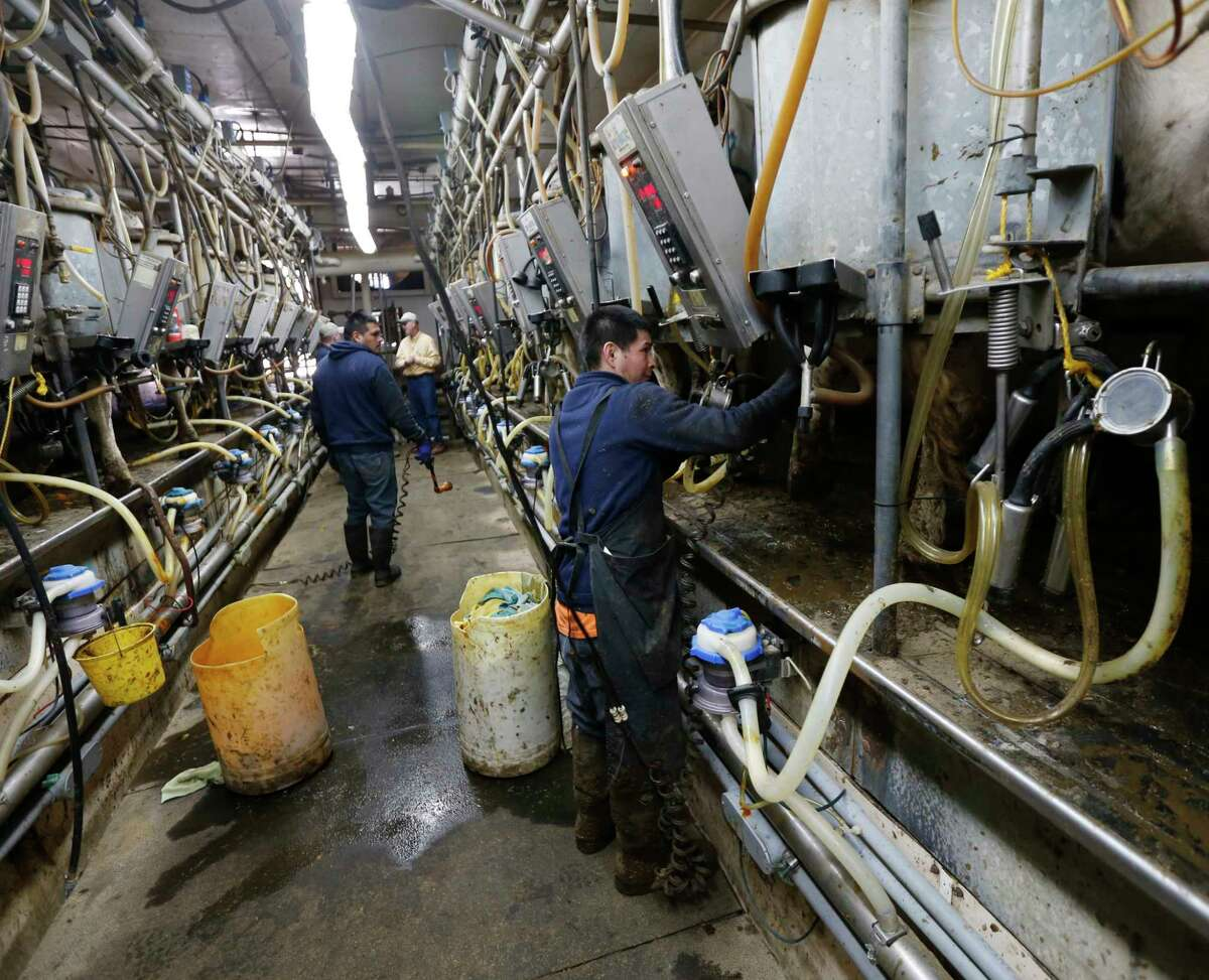 In this April 30, 2015 photo, farm workers operates machinery in the milking parlor at Eildon Tweed Farm in West Charlton, N.Y. This is shaping up as a challenging year for all U.S. dairy farmers, who enjoyed record high milk prices and low feed prices last year.