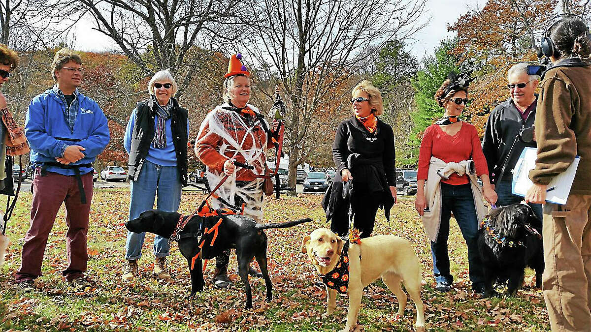 White Memorial Conservation Center Director Gerri Griswold (center, in costume) led 40 canine and human visitors (and her own Black Labrador, Bradley) on the first annual Spooky Walk at the Center at 80 Whitehall Road in Litchfield, on Saturday afternoon.