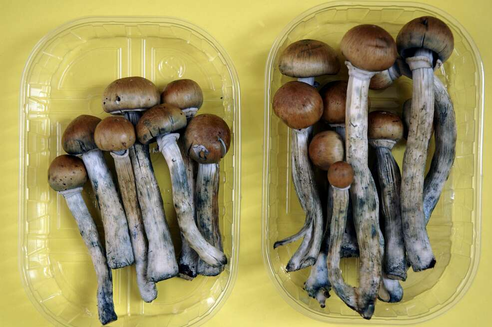 Fresh Colombian magic mushrooms legally on sale in Camden market London in June 2005. A ballot measure could legalize psilocybin in California as early as 2018. — Photograph: Photofusion/UIG/Getty Images.