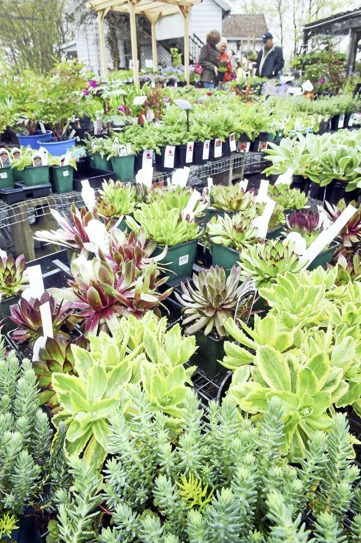 (Arnold Gold-New Haven Register) Plants for sale at Natureworks in North Branford Saturday.