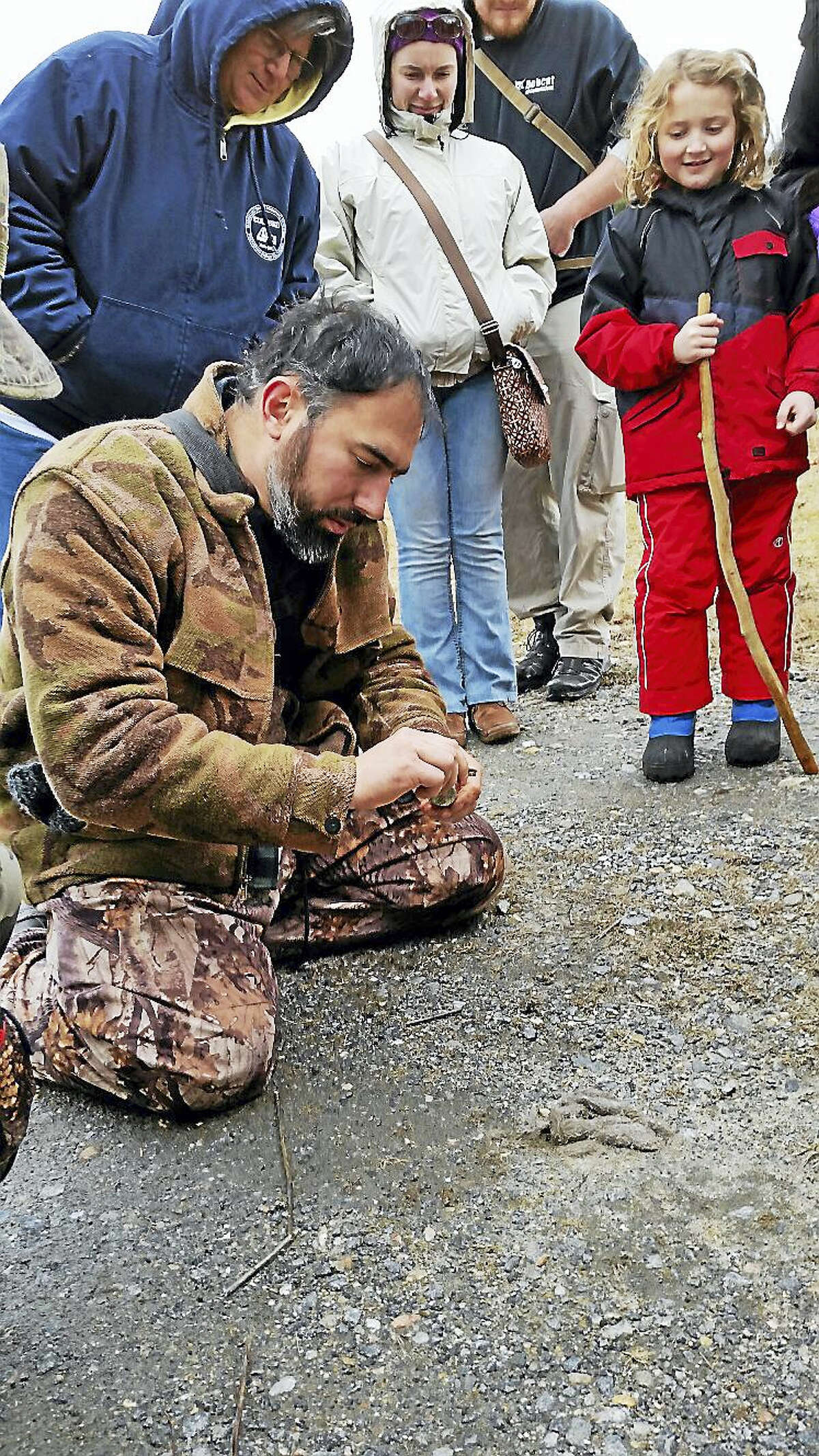 N.F. Ambery Dobos examined the scat containing deer hair left by a suspected coyote.