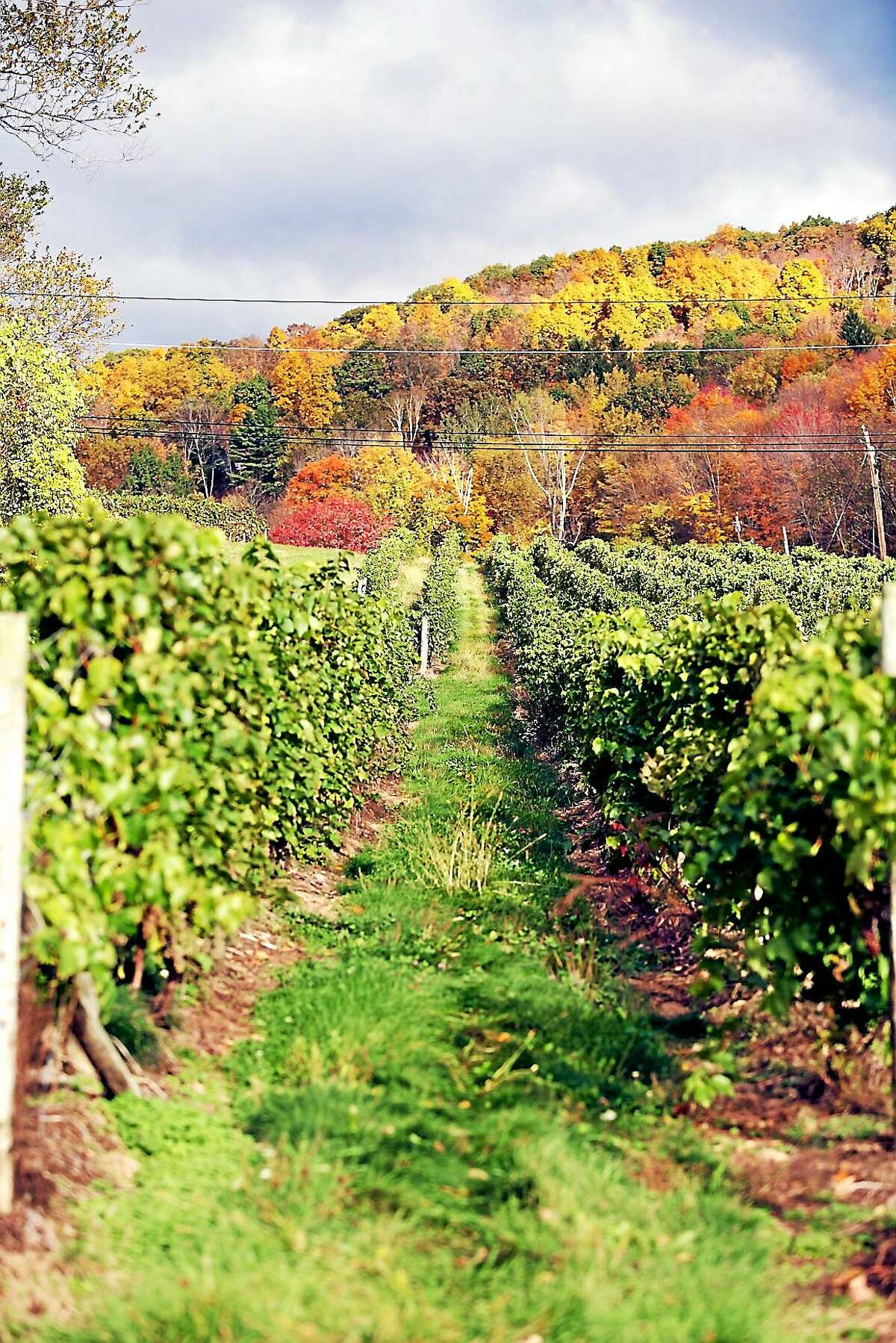 A scene from Hopkins Vineyards in the fall.