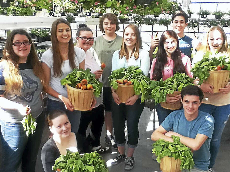 Contributed photoNorthwestern Regional High School's Ag Ed Greenhouse Production class recently harvested  their crop of golden beets which they raised. They are making room in the greenhouse because they are bursting at the seams in final preparations for the spring plant sale over Mother's day weekend May 7-8 at the high school in Winsted. Photo: Journal Register Co.