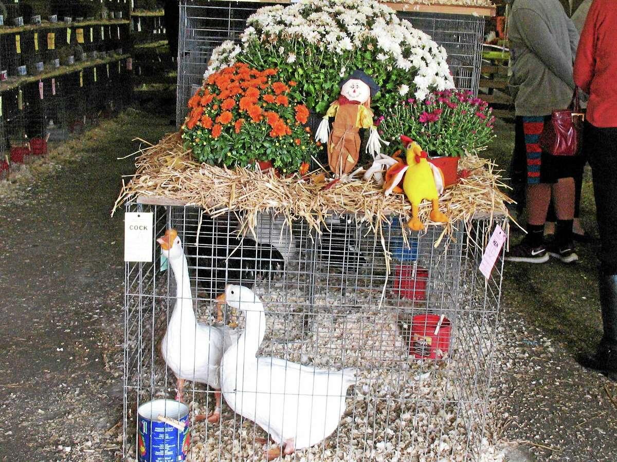 An autumn scene at the agricultural Riverton Fair Sunday.