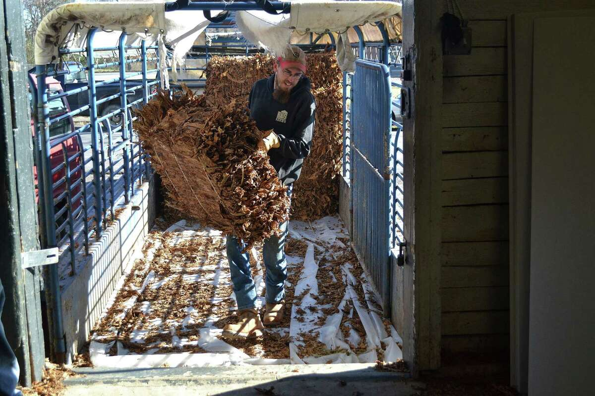 In this Nov. 18, 2014, photo, a farmer unloads bales of burley tobacco at the tobacco auction in Danville, Ky.