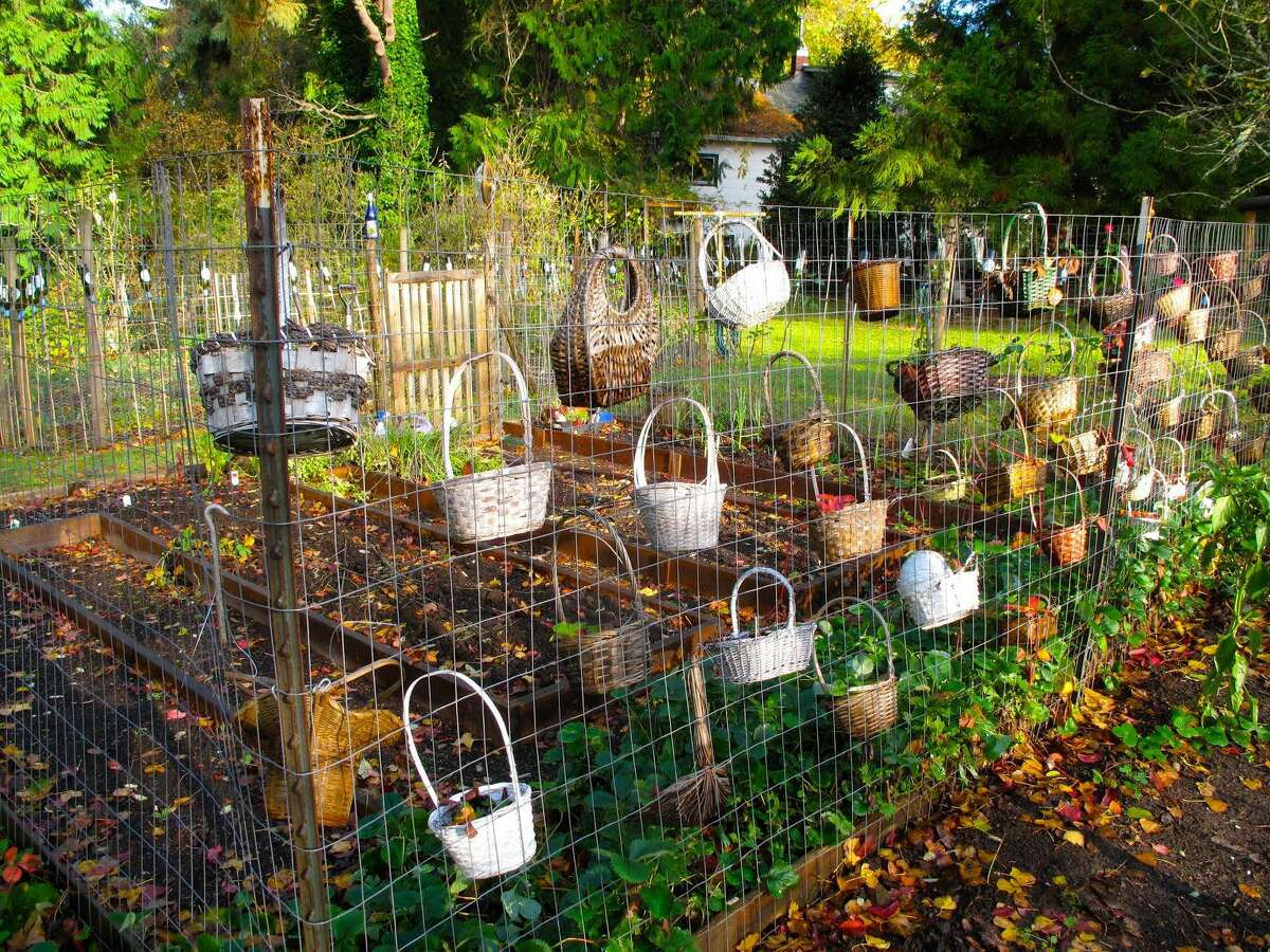 In this Nov. 8, 2012 photo, creativity comes into play in finding unused objects like these baskets integrated into a garden near Langley, Wash. Garden accessories can be used as decorations, for fun and eccentricity or to fit a theme.